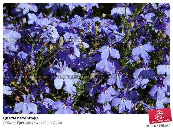 Цветы петергофа, фото № 136062, снято 20 июля 2006 г. (c) Юлия Севастьянова / Фотобанк Лори