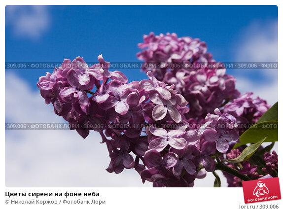 Цветы сирени на фоне неба, фото № 309006, снято 31 мая 2008 г. (c) Николай Коржов / Фотобанк Лори