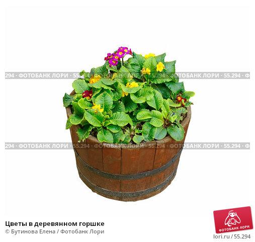 Цветы в деревянном горшке, фото № 55294, снято 24 июня 2007 г. (c) Бутинова Елена / Фотобанк Лори