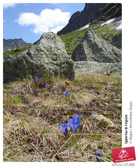 Цветы в горах, фото № 37430, снято 3 июля 2006 г. (c) Маря / Фотобанк Лори