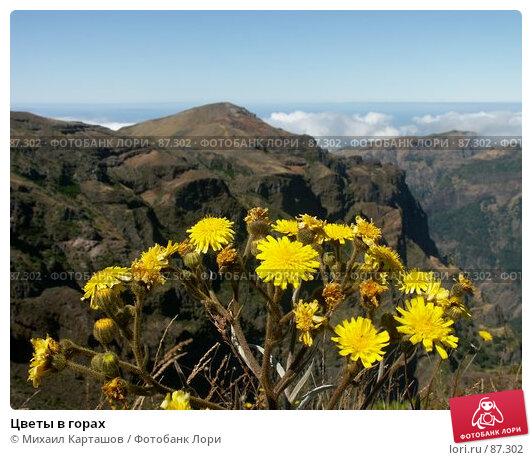 Цветы в горах, эксклюзивное фото № 87302, снято 22 февраля 2017 г. (c) Михаил Карташов / Фотобанк Лори