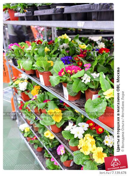 магазин оби цветы: