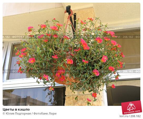 Цветы в кашпо, фото № 208182, снято 11 августа 2006 г. (c) Юлия Селезнева / Фотобанк Лори