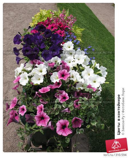 Цветы  в контейнере, фото № 310594, снято 1 июня 2008 г. (c) Заноза-Ру / Фотобанк Лори