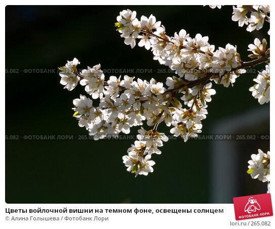 Цветы войлочной вишни на темном фоне, освещены солнцем, эксклюзивное фото № 265082, снято 27 апреля 2008 г. (c) Алина Голышева / Фотобанк Лори