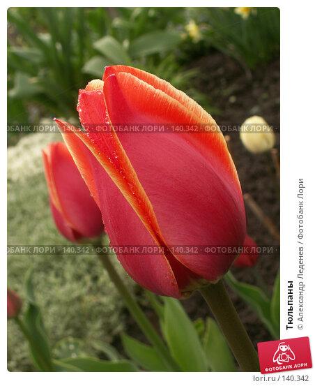 Тюльпаны, фото № 140342, снято 12 мая 2007 г. (c) Александр Леденев / Фотобанк Лори