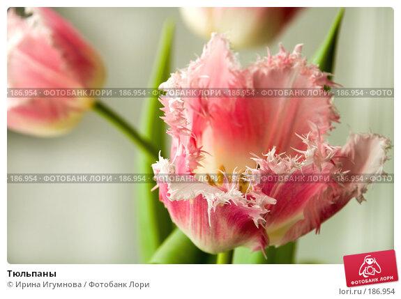 Тюльпаны, фото № 186954, снято 9 апреля 2007 г. (c) Ирина Игумнова / Фотобанк Лори