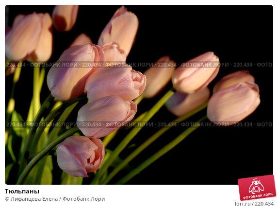 Купить «Тюльпаны», фото № 220434, снято 7 марта 2008 г. (c) Лифанцева Елена / Фотобанк Лори