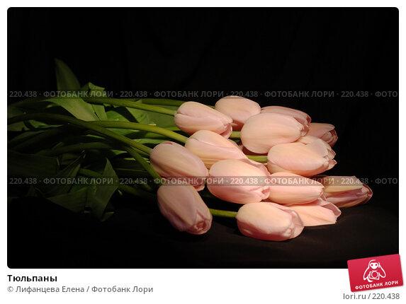 Тюльпаны, фото № 220438, снято 7 марта 2008 г. (c) Лифанцева Елена / Фотобанк Лори