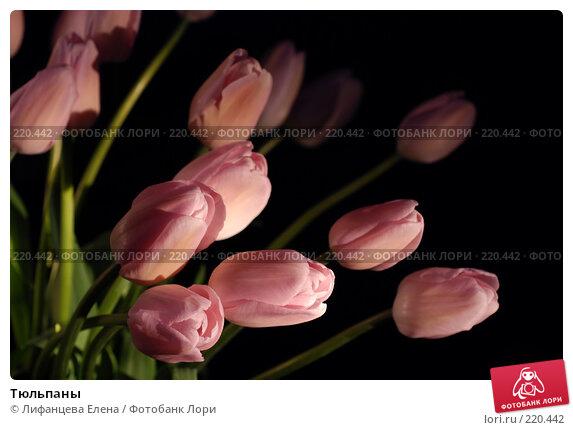 Купить «Тюльпаны», фото № 220442, снято 7 марта 2008 г. (c) Лифанцева Елена / Фотобанк Лори