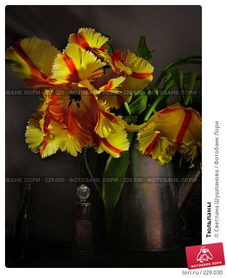Тюльпаны, фото № 229030, снято 20 марта 2006 г. (c) Светлана Шушпанова / Фотобанк Лори