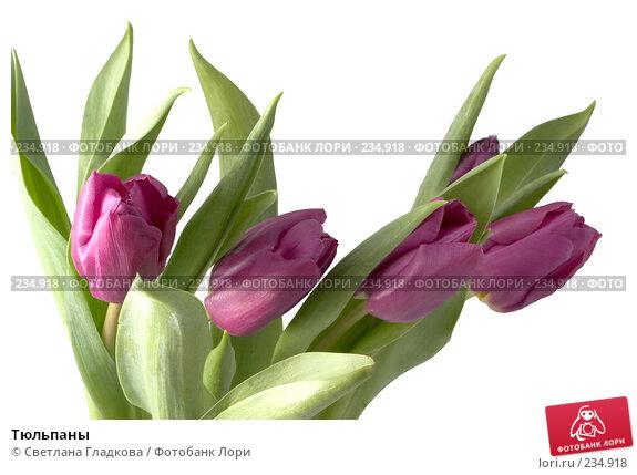 Купить «Тюльпаны», фото № 234918, снято 20 апреля 2018 г. (c) Cветлана Гладкова / Фотобанк Лори