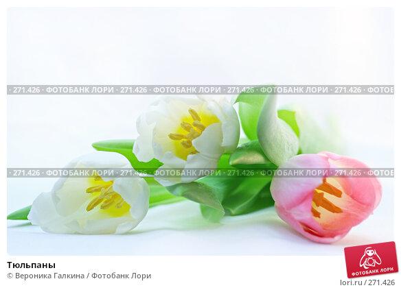 Тюльпаны, фото № 271426, снято 1 марта 2008 г. (c) Вероника Галкина / Фотобанк Лори