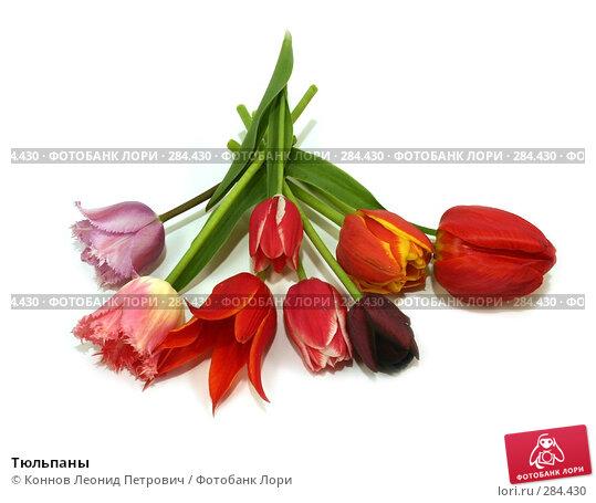Тюльпаны, фото № 284430, снято 13 мая 2008 г. (c) Коннов Леонид Петрович / Фотобанк Лори