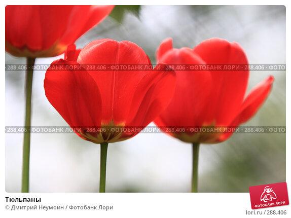 Тюльпаны, эксклюзивное фото № 288406, снято 21 апреля 2008 г. (c) Дмитрий Неумоин / Фотобанк Лори