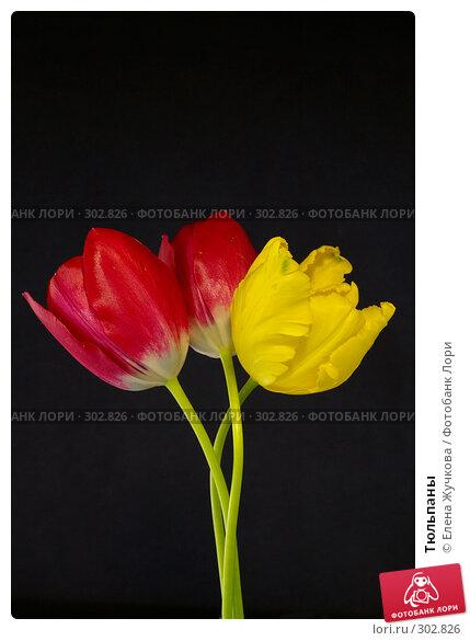 Тюльпаны, фото № 302826, снято 14 мая 2008 г. (c) Елена Жучкова / Фотобанк Лори
