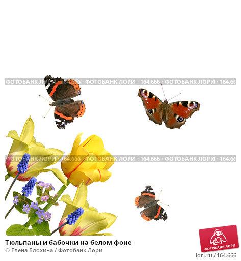 Тюльпаны и бабочки на белом фоне, фото № 164666, снято 24 апреля 2007 г. (c) Елена Блохина / Фотобанк Лори