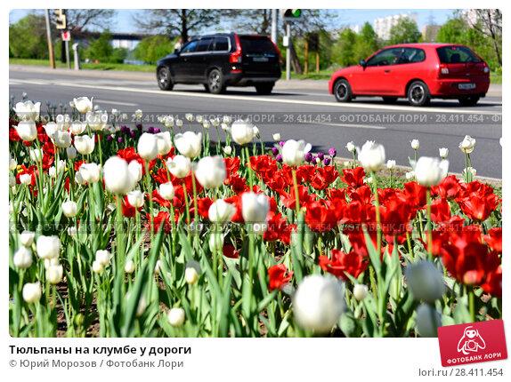 Купить «Тюльпаны на клумбе у дороги», эксклюзивное фото № 28411454, снято 9 мая 2018 г. (c) Юрий Морозов / Фотобанк Лори