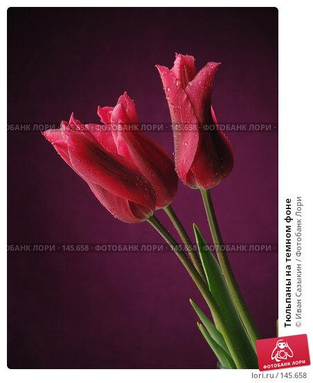 Тюльпаны на темном фоне, фото № 145658, снято 20 апреля 2004 г. (c) Иван Сазыкин / Фотобанк Лори