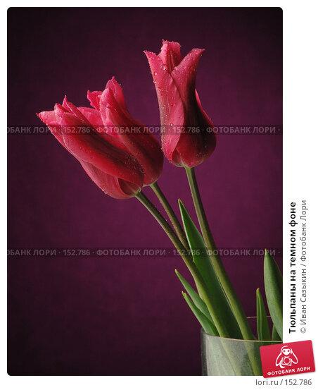 Тюльпаны на темном фоне, фото № 152786, снято 20 апреля 2004 г. (c) Иван Сазыкин / Фотобанк Лори