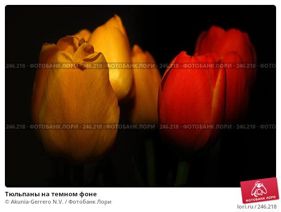 Тюльпаны на темном фоне, фото № 246218, снято 11 марта 2007 г. (c) Akunia-Gerrero N.V. / Фотобанк Лори