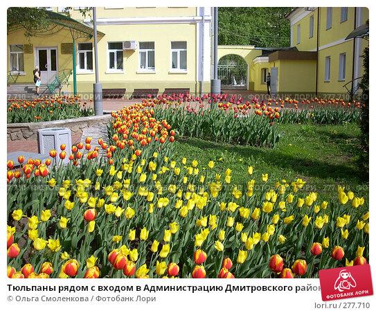 Тюльпаны рядом с входом в Администрацию Дмитровского района, фото № 277710, снято 5 мая 2008 г. (c) Ольга Смоленкова / Фотобанк Лори