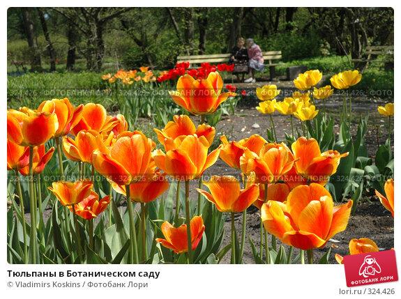 Тюльпаны в Ботаническом саду, фото № 324426, снято 22 мая 2005 г. (c) Vladimirs Koskins / Фотобанк Лори