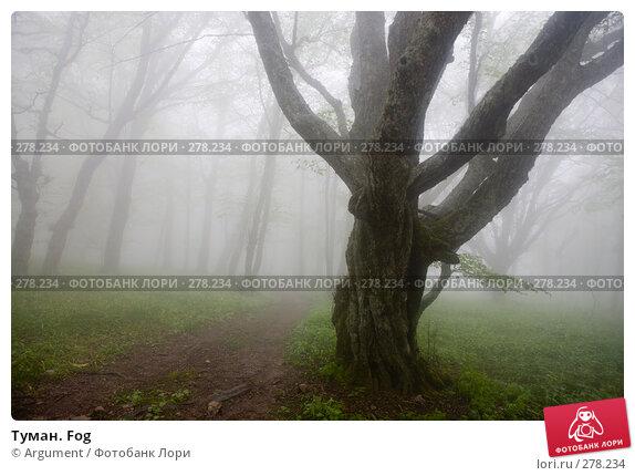 Купить «Туман. Fog», фото № 278234, снято 29 апреля 2008 г. (c) Argument / Фотобанк Лори
