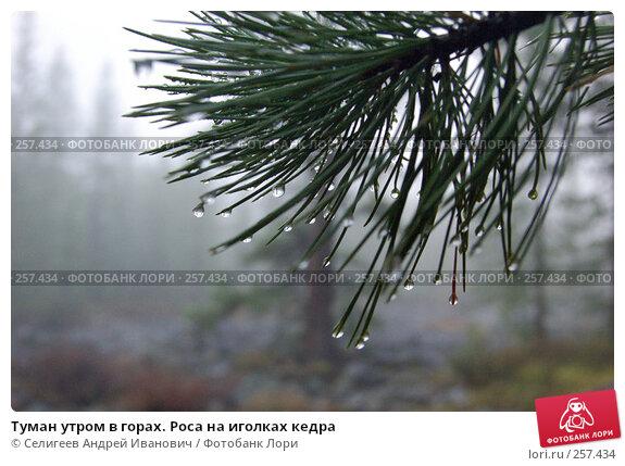 Туман утром в горах. Роса на иголках кедра, фото № 257434, снято 26 августа 2007 г. (c) Селигеев Андрей Иванович / Фотобанк Лори