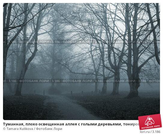Купить «Туманная, плохо освещенная аллея с голыми деревьями, тонированная в десатурированный голубой», фото № 3186, снято 31 декабря 2003 г. (c) Tamara Kulikova / Фотобанк Лори
