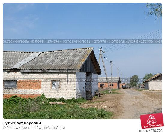 Тут живут коровки, эксклюзивное фото № 270770, снято 1 мая 2008 г. (c) Яков Филимонов / Фотобанк Лори