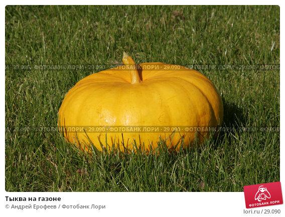 Тыква на газоне, фото № 29090, снято 23 сентября 2006 г. (c) Андрей Ерофеев / Фотобанк Лори