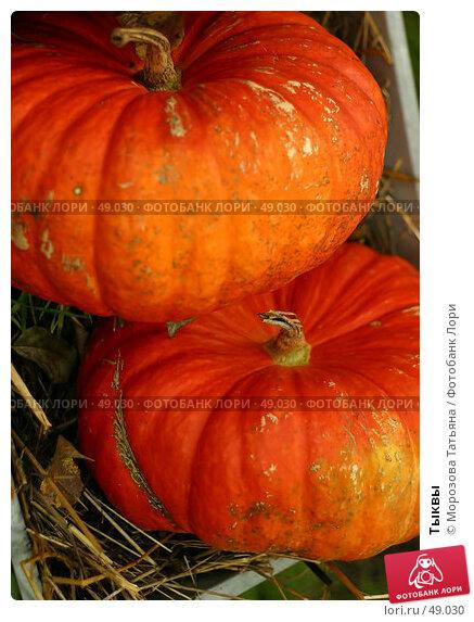 Тыквы, фото № 49030, снято 9 сентября 2006 г. (c) Морозова Татьяна / Фотобанк Лори