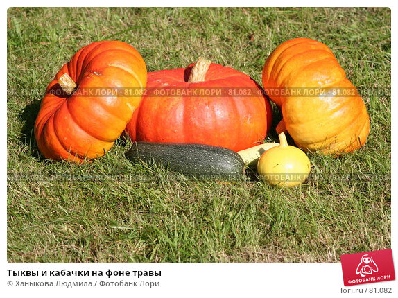 Купить «Тыквы и кабачки на фоне травы», фото № 81082, снято 9 сентября 2007 г. (c) Ханыкова Людмила / Фотобанк Лори