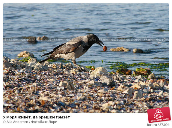 У моря живёт, да орешки грызёт, фото № 87094, снято 16 мая 2007 г. (c) Alla Andersen / Фотобанк Лори