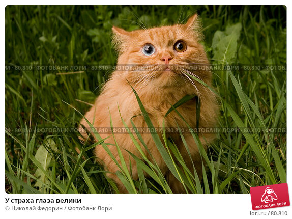 У страха глаза велики, фото № 80810, снято 21 мая 2006 г. (c) Николай Федорин / Фотобанк Лори