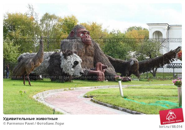 Удивительные животные, фото № 88014, снято 16 сентября 2007 г. (c) Parmenov Pavel / Фотобанк Лори