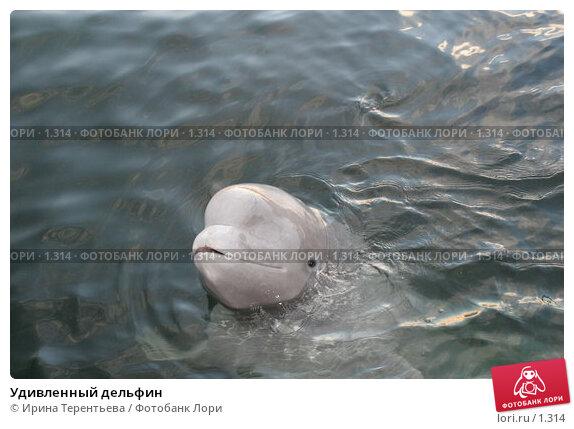 Купить «Удивленный дельфин», эксклюзивное фото № 1314, снято 15 сентября 2005 г. (c) Ирина Терентьева / Фотобанк Лори