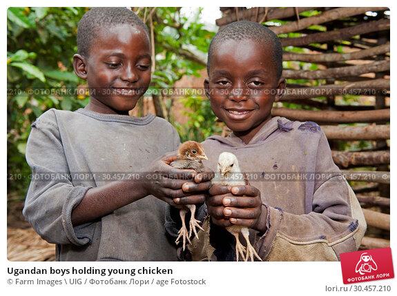 Ugandan boys holding young chicken. Стоковое фото, фотограф Farm Images \ UIG / age Fotostock / Фотобанк Лори