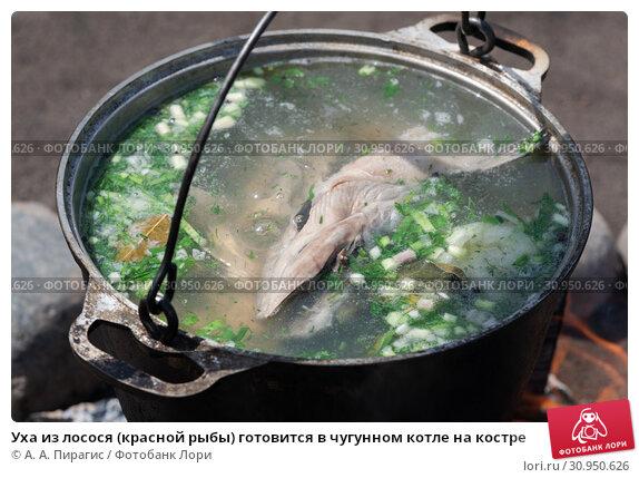 Уха из лосося (красной рыбы) готовится в чугунном котле на костре. Стоковое фото, фотограф А. А. Пирагис / Фотобанк Лори