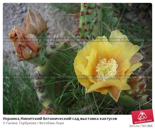 Украина,Никитский Ботанический сад,выставка кактусов, фото № 161866, снято 22 июня 2005 г. (c) Галина  Горбунова / Фотобанк Лори