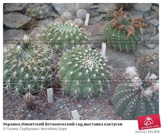 Украина,Никитский Ботанический сад,выставка кактусов, фото № 161874, снято 22 июня 2005 г. (c) Галина  Горбунова / Фотобанк Лори