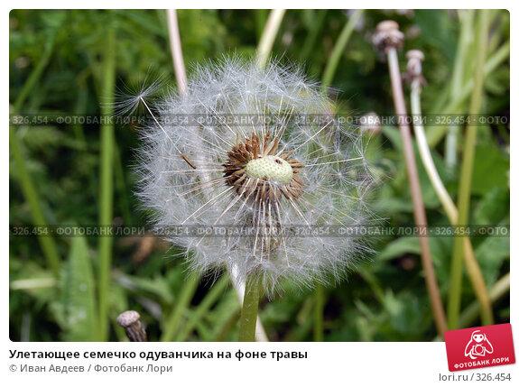 Улетающее семечко одуванчика на фоне травы, фото № 326454, снято 12 июня 2008 г. (c) Иван Авдеев / Фотобанк Лори