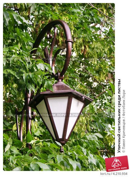 Купить «Уличный светильник среди листвы», фото № 4210934, снято 16 июня 2012 г. (c) Павел Кричевцов / Фотобанк Лори