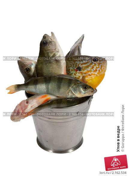 Ведро с рыбой сонник