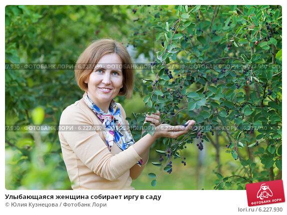 Купить «Улыбающаяся женщина собирает иргу в саду», фото № 6227930, снято 18 июля 2014 г. (c) Юлия Кузнецова / Фотобанк Лори