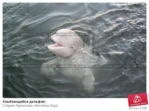 Улыбающийся дельфин, эксклюзивное фото № 1318, снято 15 сентября 2005 г. (c) Ирина Терентьева / Фотобанк Лори