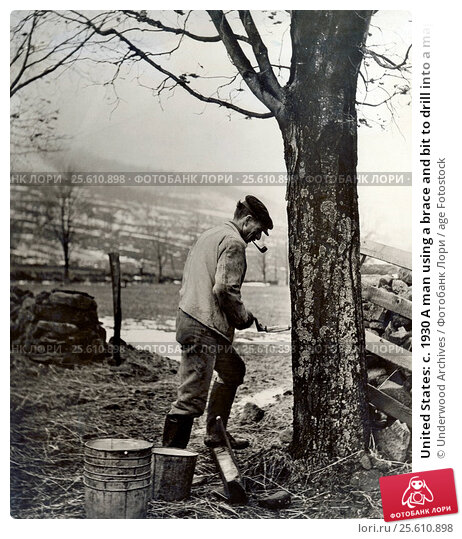Купить «United States: c. 1930 A man using a brace and bit to drill into a maple tree to set up a syrup tap.», фото № 25610898, снято 2 февраля 2017 г. (c) age Fotostock / Фотобанк Лори
