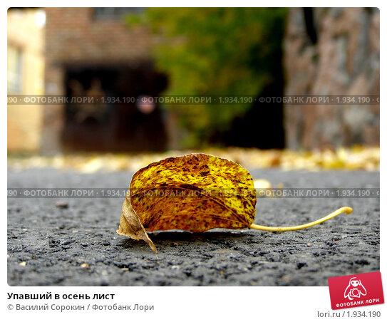 Упавший в осень лист. Стоковое фото, фотограф Василий Сорокин / Фотобанк Лори
