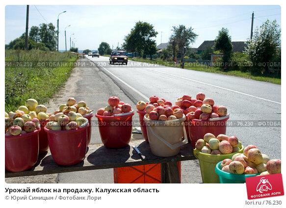 Купить «Урожай яблок на продажу. Калужская область», фото № 76230, снято 11 августа 2007 г. (c) Юрий Синицын / Фотобанк Лори